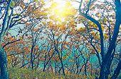 Clorful Foliage Tree