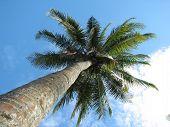 Coconut Tree At Sandy Beach
