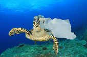 Plastic pollution in ocean environmental problem. Turtles can mistake plastic bags for jellyfish and poster