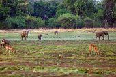 South Luangwa Landscape With Elephants, Antelopes And Other Animals. Elephants On A Plain In South L poster
