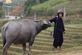 Vietnamese Farmer with Water Buffalo