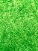 Green Green Grass. Natural Background. Green Grass Background Texture. Spring Season. Summer Nature. poster