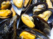 foto of convection  - Mussels steamed in a convection oven at - JPG