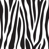 Animal print, cores de fundo sem costura Preto e branco de textura do zebra