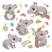 Koala Bear. Australia Animal, Baby Hugging Mom. Isolated Koalas On Tree, Flowers And Nature Elements poster