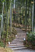 Bamboo Grove In Autumn Of Kodaiji Temple Gardens, Kyoto poster