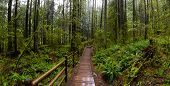 Lynn Canyon Park, North Vancouver, British Columbia, Canada. Panoramic View Of A Beautiful Wooden Pa poster