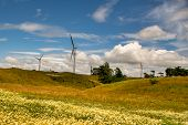 Yellow Wild Flowers Growing In The Rural Pasture Beneath The Giant Wind Turbines Generating Electric poster