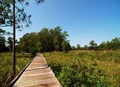 Walk in the Marsh