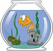Sad Goldfish In Bowl