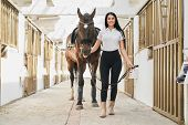 Full Length Portrait Of Beautiful Dark Haired Woman Holding Bridles And Taking Big Sportive Horse Ou poster
