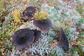 Wilting Wild Mushrooms