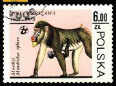 Vintage  Postage Stamp. Mandrills.