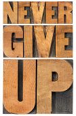 never give up - isolated phrase in vintage letterpress wood type, scaled to rectangle
