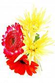 picture of tuberose  - red and orange gerbera - JPG