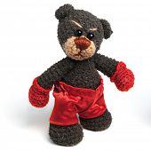 Teddybär Boxer in klassischen Vintage-Stil, isolated on white background