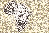 Background Of The African Cheetah