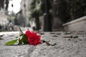 stock photo of broken heart flower  - fallen red rose flower lying forgotten on the street - JPG