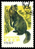 Vintage  Postage Stamp.  Sable.
