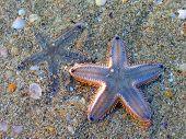 Two Starfish On A Sandy Beach