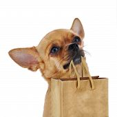 Red Chihuahua Dog With Recycle Paper Bag Isolated On White Background.