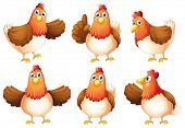 picture of laying eggs  - Illustration of the six fat chickens on a white background - JPG