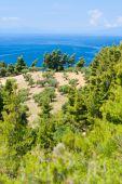 Olive Trees And Aegean Sea.