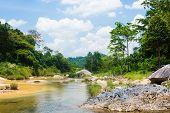 River In Jungle