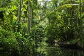 stock photo of swamps  - Verdant swamp in the Kerelan Backwaters - JPG