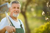 image of spade  - Portrait of a handsome senior man gardening in his garden  - JPG