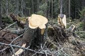 Trees cut down in the forest