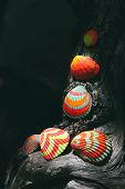 Dark atmospheric image of colorful hand painted striped seashells arranged in a decorative artistic