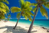 stock photo of deserted island  - Deserted beach with coconut palm trees on Fiji Islands - JPG