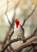 Beautiful bird with red head standing on branch