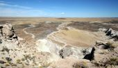 A view of petrified forest