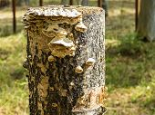 The fungus tree