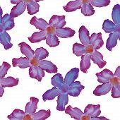stock photo of desert-rose  - Desert Rose lilac flower - JPG