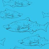 Sharks In The Water. Black Outline On The Blue Background. Sketch