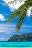 Island Lagoon Jungle and Sea