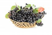 image of aronia  - cluster black aronia in basket on white background - JPG