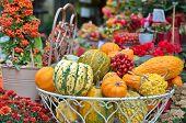 Decorative Pumpkins