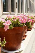 Flower pots, outdoors