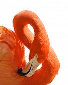 Digital Painting Of Pink Flamingo Portrait