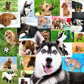 Collage of pretty dogs