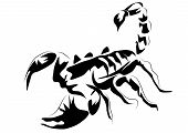 picture of venomous animals  - scorpion - JPG