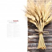 Wheat ears on wooden background (with easy removable sample text)