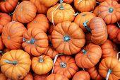 Little pumpkins background