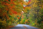 Road through bright autumn trees