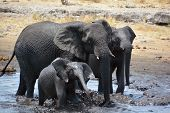 image of mud  - View of an elephant covered in black mud  - JPG