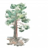 Pine Tree On A White Background. Watercolor. Sketch. Vector